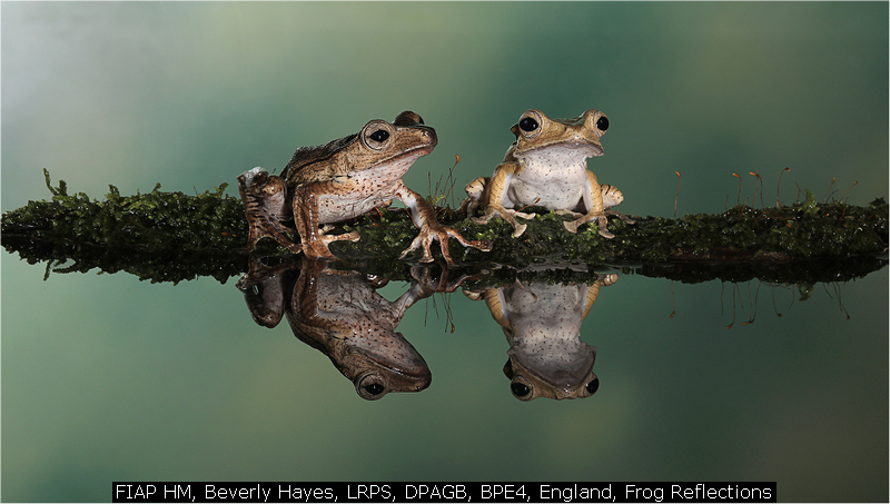 FIAP HM, Beverly Hayes, LRPS, DPAGB, BPE4, England, Frog Reflections